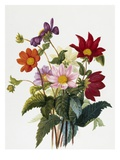 Still Life of Dahlias