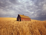 Old Barn Amidst Wheat Field