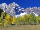 Aspen Trees Before Maroon Peaks