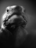Reptile's Face