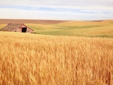 Sprawling Wheat Field