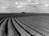 Plowed Fields on a Mechanized Cotton Farm