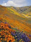 Hillside Wildflowers in Bloom