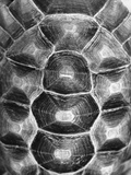 Pattern on Turtle&#39;s Shell