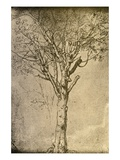 Drawing a Tree by Leonardo da Vinci Giclée par Bettmann