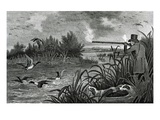 Engraving Of Duck Shooting