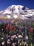 Flowers before Mount Rainier