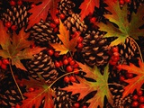 Autumn Leaves  Berries and Pinecones