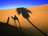 Shadow of Camel and Palm Tree