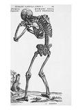 Skeleton Posterior
