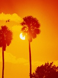 Orange Sunset and Silhouetted Palm Trees