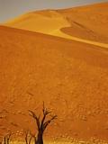 Camelthorn Trees Below Sand Dunes