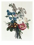 Bouquet of Camellia and Auricula