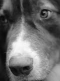 Dog's Nose