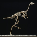 Mononykus Skeleton