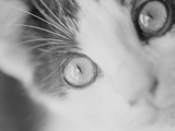Cat&#39;s Eyes