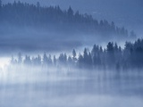 Mist Hiding Trees Above the Little Spokane River Valley