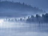 Mist Hiding Trees Above the Little Spokane River Valley