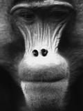 Ape Face