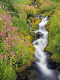 Wildflowers Blooming Along Rushing Creek