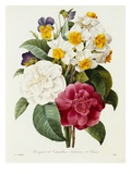 Bouquet of Camellias  Narcissus  and Pansies