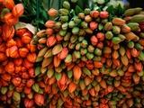Tulip Harvest