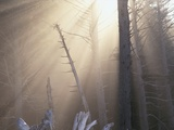Sunlight Illuminating Fog in Barren Forest
