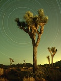 Star Trails and Joshua Trees