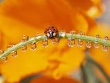 Ladybug Crawling