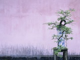 Tree in Vase and Pink Wall
