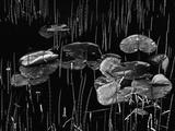 Swamp  Alaska  1977