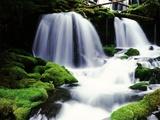 Gifford Pinchot National Forest - Washington