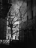 Bare Tree Below Buildings  Manhattan  1944