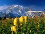 Wildflowers Blooming Beneath a Snowy Mountain