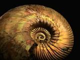Late Jurassic Fossil