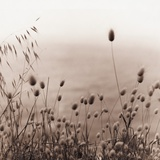 Grasses by the Ocean