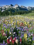 Wildflower Meadow and Tatoosh Range