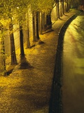 Trees Along the Seine River at Night