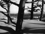 Dunes and Trees  Oregon  1962