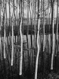 Trees in Shallow Water