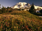Wildflower Meadow Below Mount Rainier