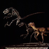 Skeleton and Model of Deinonychus