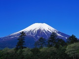 Mount Fuji and Pine Trees