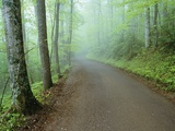 Road in Great Smoky Mountains National Park