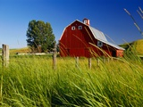 Red Barn in Long Grass
