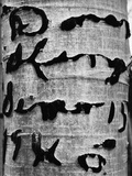 Tree Bark Graffiti