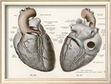 Two Views of the Heart with the Parts Labelled in Latin