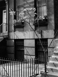 Brownstones by Brett Weston