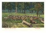Deer Park  Belle Isle  Detroit  Michigan