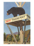 Bear  Clark's Trading Post  Woodstock  New Hampshire